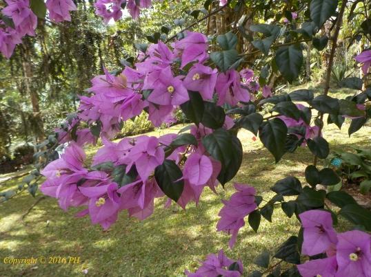 B.Wil.Pink